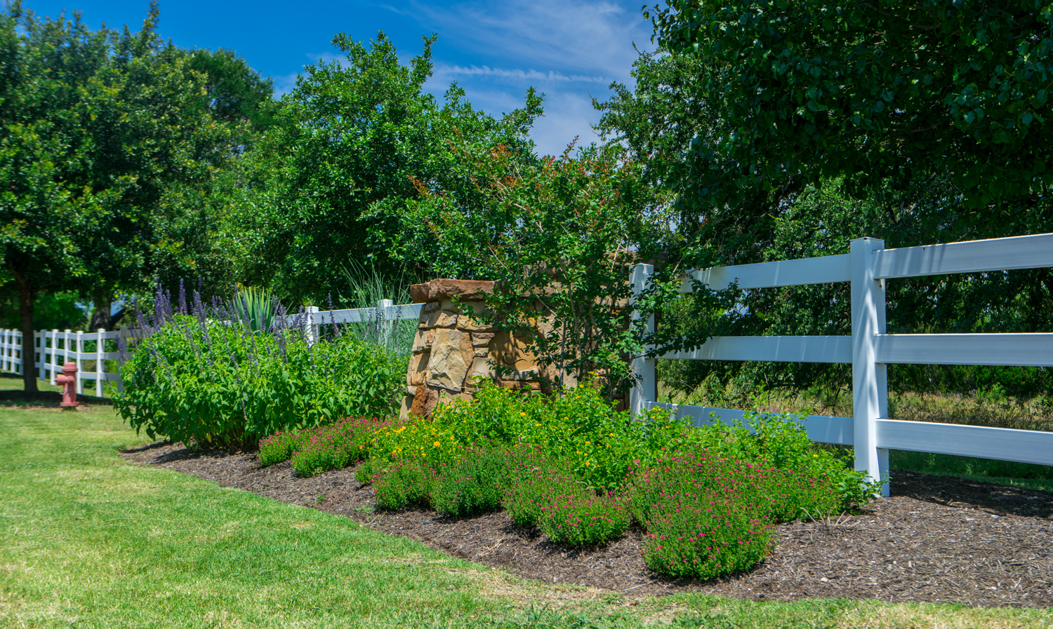 Commercial landscape plant bed with mulch