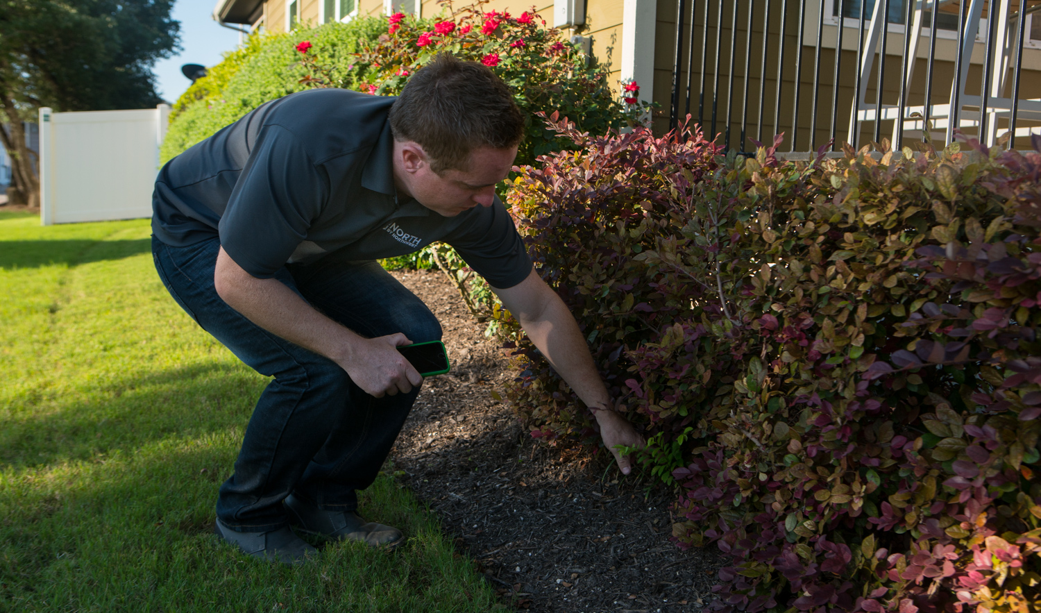 commercial landscape technician caring for shrubs