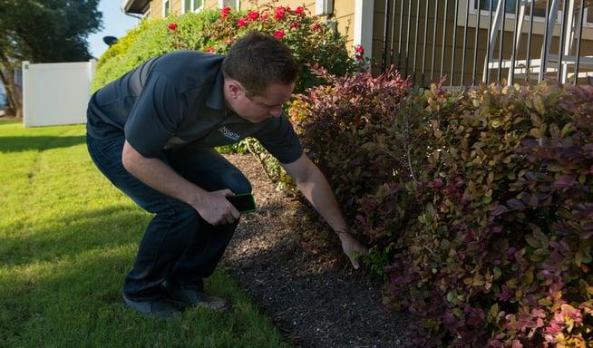 landscape company technician inspecting shrubs