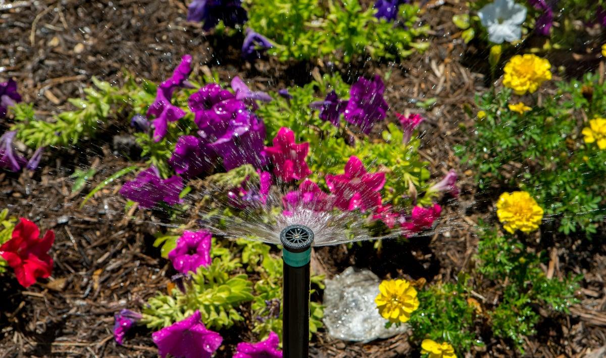 spray head irrigation installation near annuals