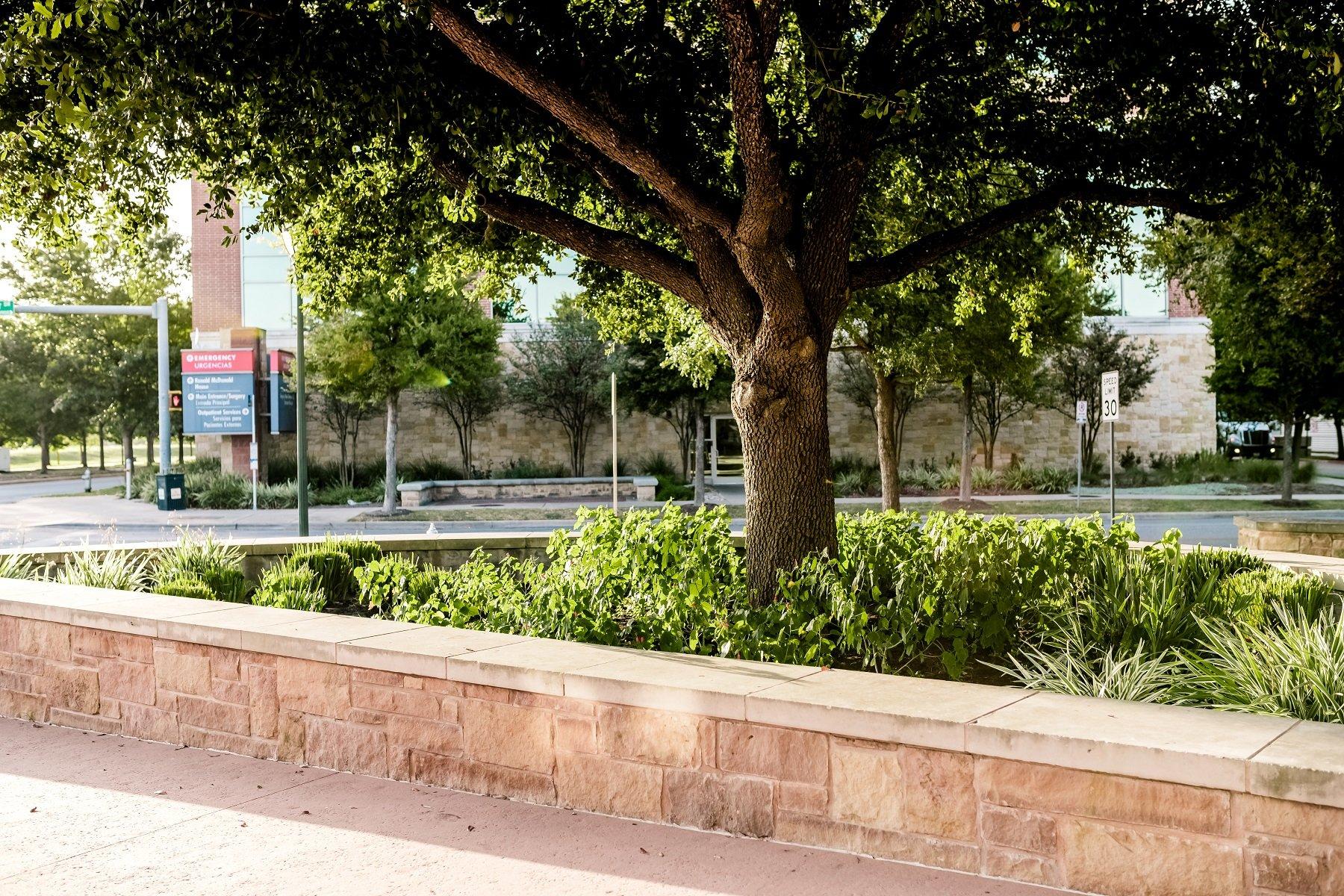 commercial-planter-plants-shrubs-grasses-tree-sidewalk