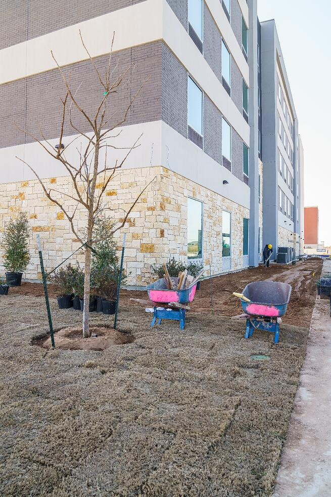 Tree landscaping at Tru and Home2 Suites By Hilton