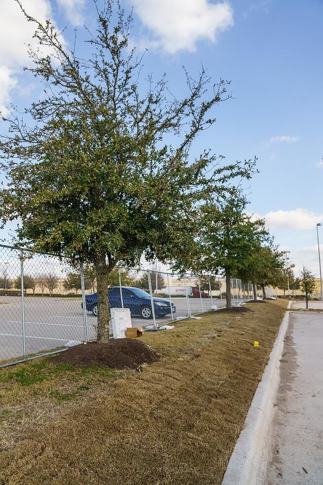 Tree landscaping at commercial property