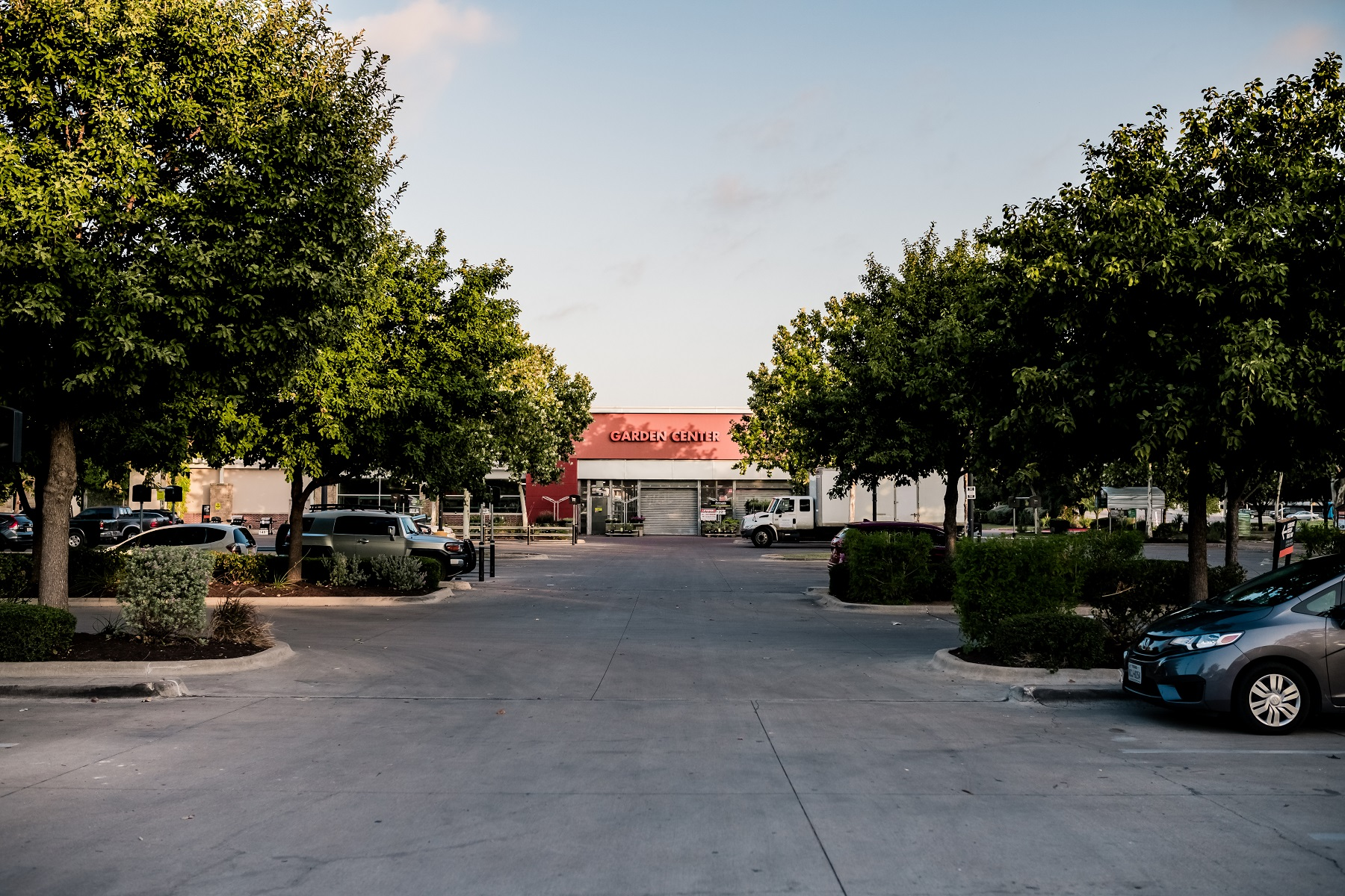 Parking lot trees